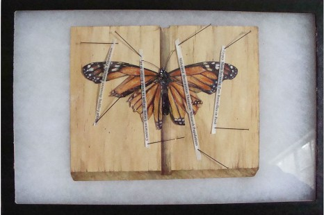 Faux monarch butterfly remains on faux spreading board